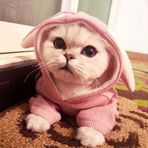 Cute Style Solid Color Rabbit Ear Hooded Sweatshirt for Pets