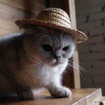 Fashion Wide Brim Straw Hat for Pets